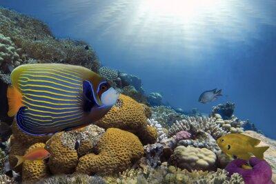 Canvastavlor Tropisk fisk på korallrev