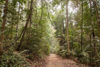 Canvastavlor Tropisk regnskog