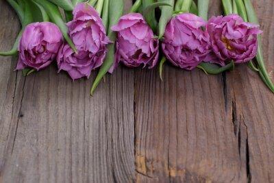 Canvastavlor tulipany