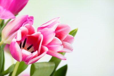 Canvastavlor tulpan blomma