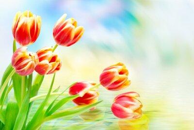 Canvastavlor Tulpan blommor närbild