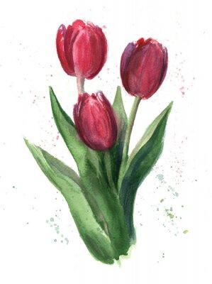 Canvastavlor Tulpan, vattenfärg