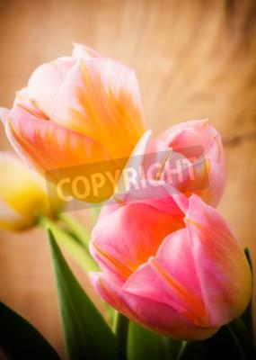 Canvastavlor Tulpaner, blom bakgrund.