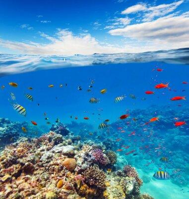 Canvastavlor Underwater korallrev med horisonten och vatten vågor