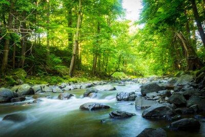 Canvastavlor Vacker drömmande fjällbäck i skogen