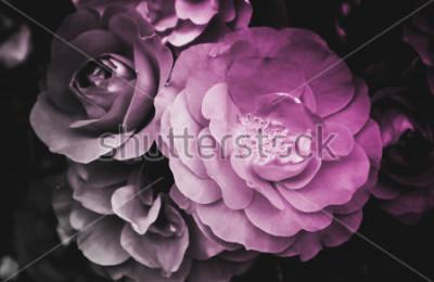 Canvastavlor Vacker rosblomma blommande blomma. Foto avbildar känslig ljus vild rose blomstring. Närbild, makrovisning. Svartvitt