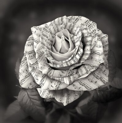 Canvastavlor Vacker svart och vit ros med anmärkning på kronbladen