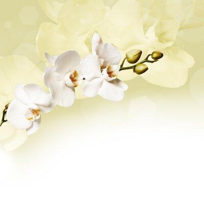 Canvastavlor Vacker vit orkidé