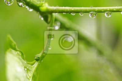 Canvastavlor Vackra gröna blad med vattendroppar