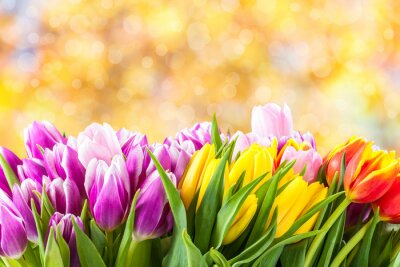 Canvastavlor Vackra tulpan blommor