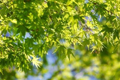 Canvastavlor våren träd