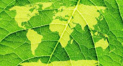 Canvastavlor Världskarta, kontinenter i grönt blad bakgrund.