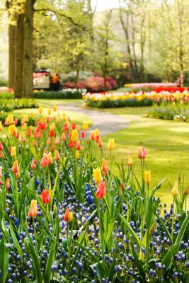 Canvastavlor vårträdgård