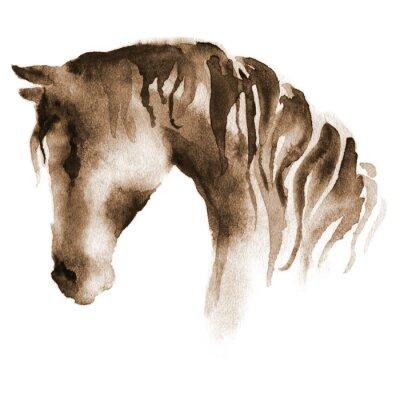 Canvastavlor Våt vattenfärg hästhuvud. Hand målade brun häst på vitt.