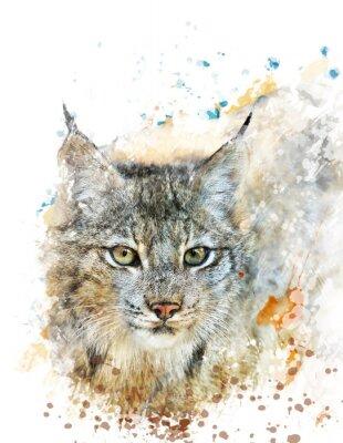 Canvastavlor Vattenfärg avbildar av Lynx