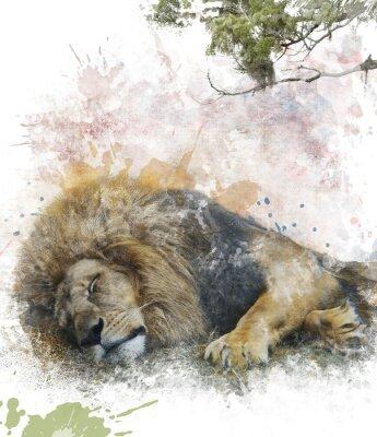 Canvastavlor Vattenfärg avbildar av Sleeping Lion
