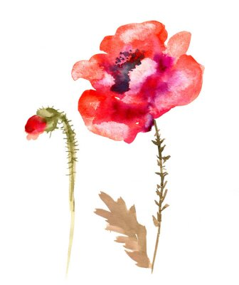 Canvastavlor Vattenfärg blomma vallmo