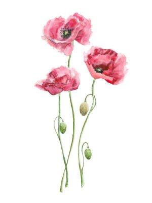 Canvastavlor vattenfärg röda blommor (vallmo)