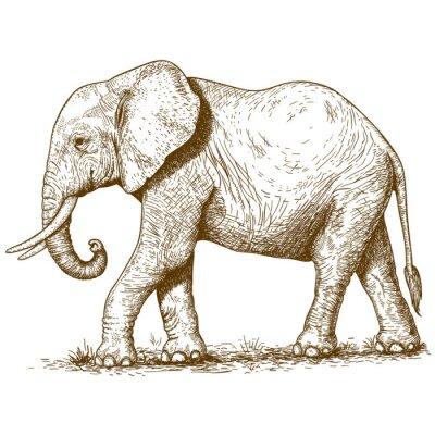 Canvastavlor vektor illustration av gravyr elefant