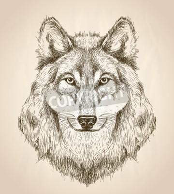 Canvastavlor Vektor skiss illustration av en varg huvud framifrån, svart och vitt vektor djurlivdesign.