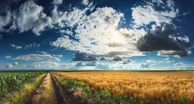 Canvastavlor Vete och majs fält före skörd