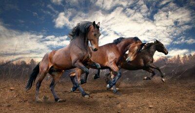 Canvastavlor vild jump fjärdhästar