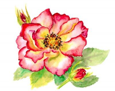 Canvastavlor Vintage vattenfärg lysande röd ros