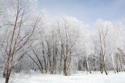 Canvastavlor vinter skog