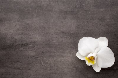 Canvastavlor Vit orkidé på grå bakgrund.