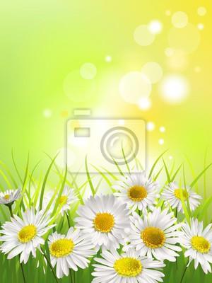 Canvastavlor Vitdaisy på en äng. Våren eller sommaren bakgrund.