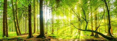 Canvastavlor Wald panorama mit Sonnenstrahlen