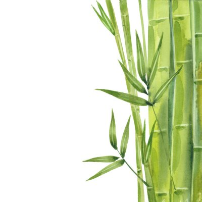 Canvastavlor watercolor bamboo stalks
