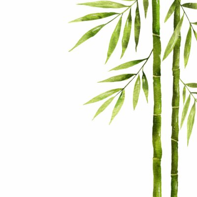 Canvastavlor Watercolor bamboo stem with green leaves and copy space.
