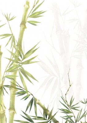 Canvastavlor Watercolor illustration painting of bamboo leaves , on white background