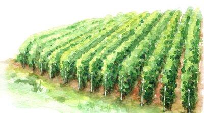 Canvastavlor Watercolor Sketch Rural Scene Fragment of Vineyard