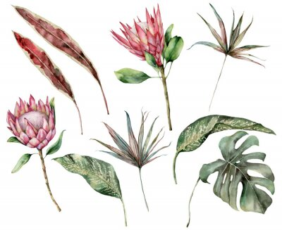 Canvastavlor Watercolor tropical set with protea and palm leaves. Hand painted exotic flower, palm and monstera leaves isolated on white background. Floral illustration for design, print, fabric or background.