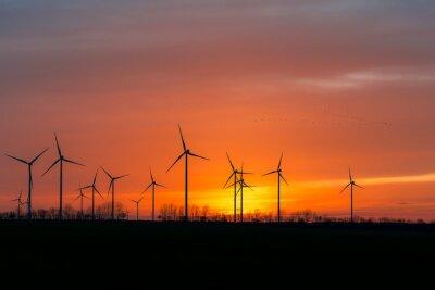 Canvastavlor Windräder in der Natur mit Vogelschwarm im Sonnen