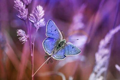 Canvastavlor маленькая бабочка среди травы в сиреневых тонах
