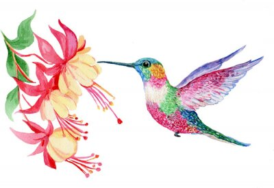 Canvastavlor акварель, маленькая птичка колибри, иллюстрация