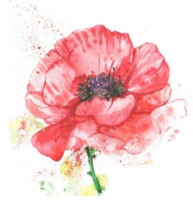 Canvastavlor красный цветок, мак, иллюстрация акварелью