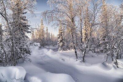 Canvastavlor Зимняя лесотундра