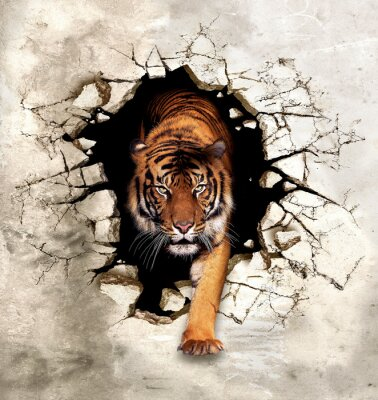 Fototapet 3d picture tiger emerges from the destroyed wall