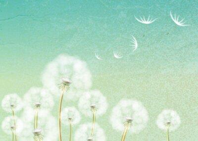 Fototapet Abstrakt bakgrund med blomma maskros