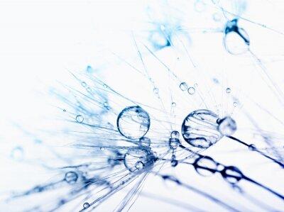 Fototapet Abstrakt makrofoto av frön med vattendroppar.