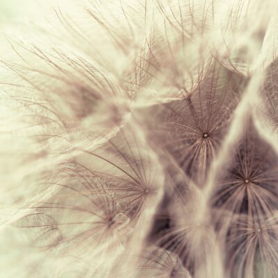 Fototapet Abstrakt närbild av en äng svartrot