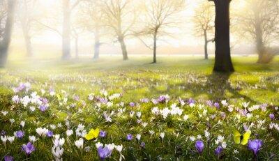 Fototapet abstrakt solig vacker Spring bakgrund