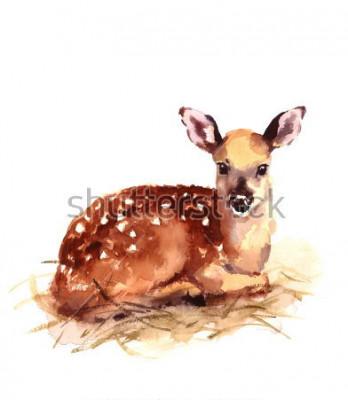 Fototapet Akvarell Baby Hjort Handmålade Fawn Illustration isolerad på vit bakgrund