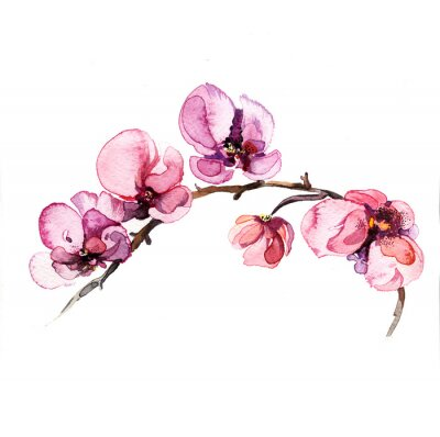 Fototapet akvarell blommor orkidé isolerad på den vita bakgrunden