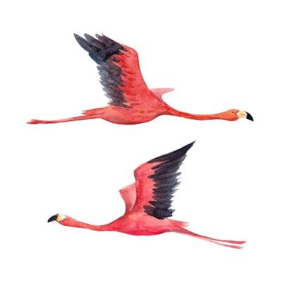Fototapet Akvarell flamingo illustration
