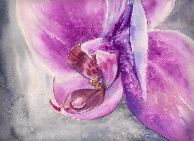 Fototapet Akvarell flämtande av rosa orkidé med små vattendroppe.
